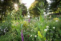 Patch of flowery meadow planting