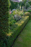 Formal border with clipped Buxus hedge and balls.