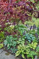Woodland shade border with a variety of Hosta, Dactylorhiza orchids and Acer palmatum - Japanese maple.