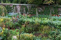 Rows of espalier fruit trees and hazel plant supports in the kitchen garden at West Dean.  More trees are trained in original shapes against the parameter wall.   A double herbaceous border runs through the centre of the vegetbale garden.