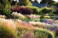 View over herbaceous borders in the walled garden at sunset.