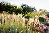 Mixed border with Lysimachia ephemerum, Phlomis tuberosa 'Amazone' and Calamagrostis brachytricha catching the evening light at Cambo Gardens, Fife, Scotland.