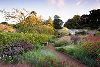 A hedge of yellow flowered Potentilla fruticosa edges the potager garden, planted with Ricinus communis 'Impala',  Persicaria amplexicaulis 'Firetail', Salvia 'Royal Bumble', S. patens and Verbena bonariensis in the walled garden at Cambo Gardens, Fife, Scotland.