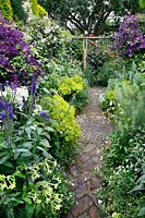 Looking down on paved brick and cobble path with colour themed beds of purple and yellow flowers, Clematis viticella 'Polish Spirit' add height