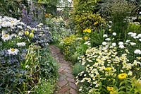 Narrow brick path winds between two borders of contrasting yellow and blue  flowers