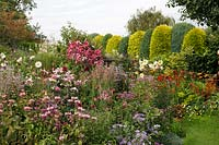 Colour themed beds of flowers with mixed conifer hedge beyond