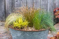 Hakenochloa macra 'Aureola', Carex comans 'Frosted Curls', Carex testacea 'Prairie Fire', Festuca glauca 'Intense Blue' and Stipa tenuissima in metal tub container