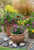Terracotta pot planted with Dianthus 'Pink Kisses', between antique chimney pots planted with Calibrachoa 'Cabaret Tropicana'. With Alchemilla mollis and Carex testacea  'Prairie Fire' behind