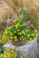Antique clay chimney pot overflows with Calibrachoa 'Cabaret Tropicana'