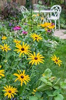 Rudbeckia in flower bed with white metal furniture in the background