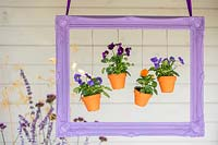 Painted purple picture frame with hanging pots of violas