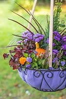 Purple themed Autumnal hanging basket planted