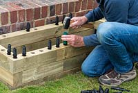 Person building raised bed: knocking the dowels into place to hold together.