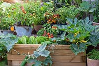 A timber raised bed planted with mixed vegetables, including lettuce, trailing Cucumber 'Bush Champion', Courgette 'Gold Rush' and dwarf Tomato 'Maskotka'.