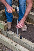 Man building timber raised bed: Inserting metal stakes into the ground for additional stability for the structure.