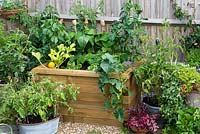 A raised wooden bed planted with vegetables including Courgette 'One Ball', trailing squash,  chilli peppers and tomatoes.