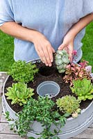 Woman planting up a garden sieve container with succulents.