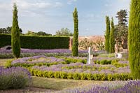Dramatic display of mixed lavenders growing with conifers and sculpture s. Downderry Lavender Farm, Kent