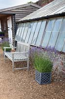 Wooden bench and containers of lavender by glasshouse, Downderry Lavender Farm, Kent, UK.