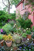 Collection of colourful potted Dahlias, Fuchsia, Geraniums, Salvia, Anthemis and Clematis on wall Garden.