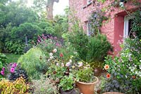 View over flowering cottage garden by pink cottage wall.