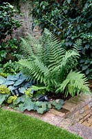 Dryopteris with Alchemilla mollis and Hosta 'Halcyon' in shady corner