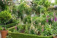 View of formal town garden. Box edging, bay tree in pot, foxgloves, peonies and roses.