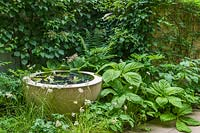 Detail of small patio garden with circular pond and foliage plants including rogersia, polygonatum, epimedium, anemone and hydrangea