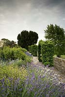 Hedera - Ivy - covered arbour on the raised walk, viewed from mixed border with Lavandula - Lavender
