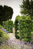 Ivy covered arbours on the raised walk at Bourton House, August