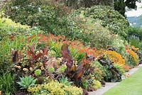 The Warm Border at Bourton House, Moreton-in-Marsh in August featuring Canna 'Durban', Dahlia 'Moonfire', Alchemilla mollis, aeoniums, Agave attenuata, Oxalis vulcanicola 'Zinfandel', Crocosmia 'Lucifer' and Helenium 'Sahin's Early Flowerer'.