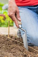 Using a trowel to make channel along a garden line for sowing or planting in straight lines