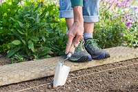 Standing on a wooden board and using a metal trowel to create channel for sowing seeds