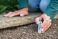 Inserting metal Kalette label into the ground next to newly-sown seeds