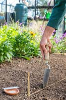 Using a trowel to create a furrow in a seedbed for planting Lettuce seed
