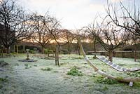 A frosty orchard