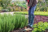 Woman adding a bamboo stick in the corner of Rosemary hedge for fastening guide string