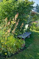 Pale hollyhock and Macleaya cordata - Plume poppy next to a rustic wooden bench