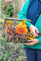 Woman holding wooden trug full of Foliage and flowers  including Rudbeckia, Helenium, Dahlia, Salvia and ornamental grasses.