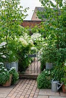 Pots of roses with bacopa and silver birches flank gate, leading into a white themed garden planted with white Hydrangea arborescens 'Annabelle', shasta daisies and Fuchsia 'Hawkshead'.