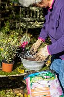 Person planting a small, vintage galvanised container with autumn-interest plants.