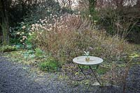 A shrub border underplanted with Galanthus - Snowdrop, some cut stems in a jar on a metal table