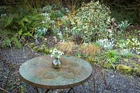 View over a metal table with a vase of Galanthus - Snowdrop - cut flowers to a mixed border full of clumps of snowdrops
