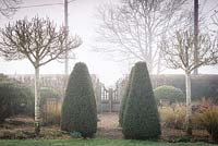 Clipped yews framed by a pair of Crataegus x lavalleei 'Carrierei' on a misty March morning