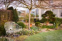 Garden in March with clipped evergreens for year round structure including yew, box and Luma apiculata, and small flowering plants including Hellebores, Cyclamen and Muscari