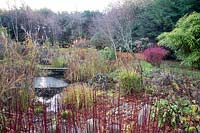 Planting around pond including Cornus - Dogwood - red stems and Bamboo