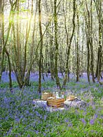 Picnic set out in Bluebell wood, with cushions, blankets, wooden boxes, baskets and food.