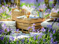 Picnic items set out in Bluebell wood in Spring