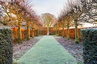 The Lime Allee on a frosty December morning. Planting includes: a beech hedge 'Fagus' and non-suckering limes, Tilia platyphyllos 'Rubra' with their bright red new growth catching the low dawn light.