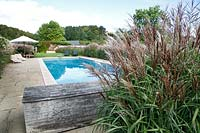 Miscanthus sinensis bordering the swimming pool at Grendon Court, September